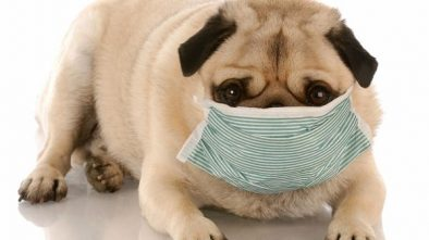 Kennel Cough in Dogs - How Worse Can it Get?