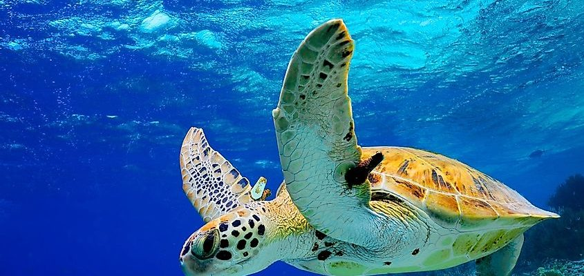 Attempt These Points If You Once You First Begin Leatherback Turtles